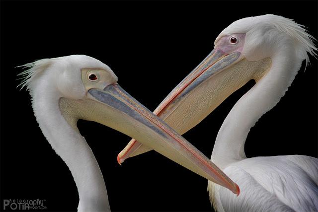 Burung yang terdapat di Paya Indah Wetlands