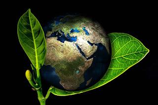 Yeşil akciğeridir Dünyanın
