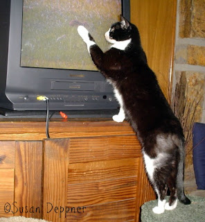 Beware! Bored cats will try to capture the birds and other animals they see on these action movies made just for them!