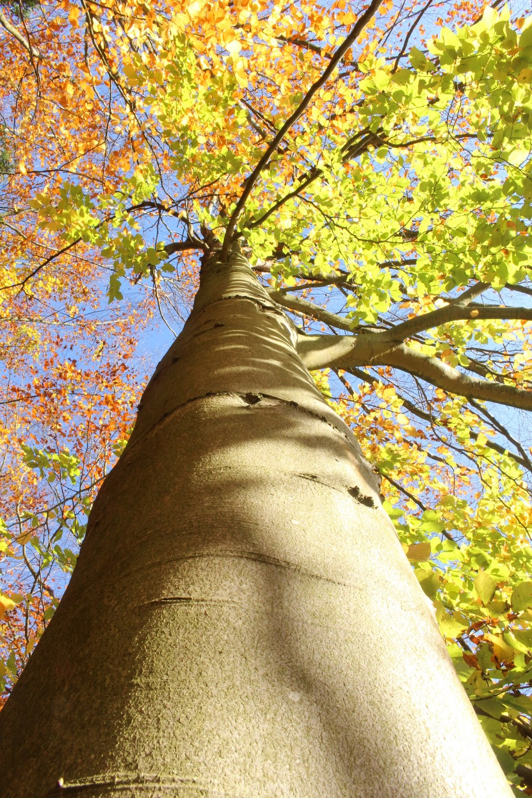 tree autumn different angles perspective photography