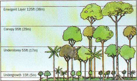 Tropical Rainforest and Monsoon Forest: Basic Knowledge of