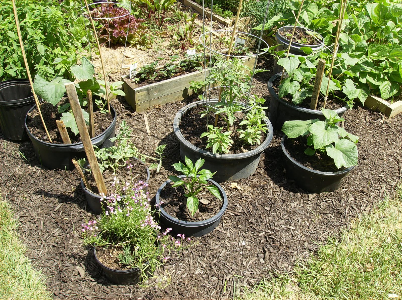 The Rusted Vegetable Garden on container gardening design, potted garden ideas, container herb garden design,