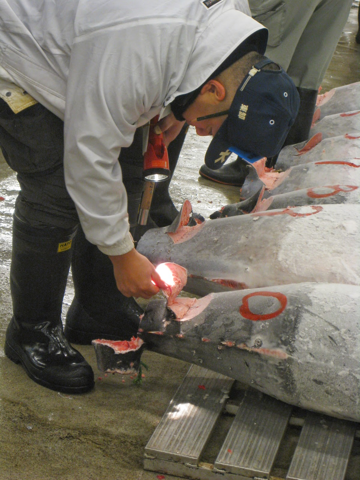 Tokyo - Bidders get to inspect tuna they want to purchase