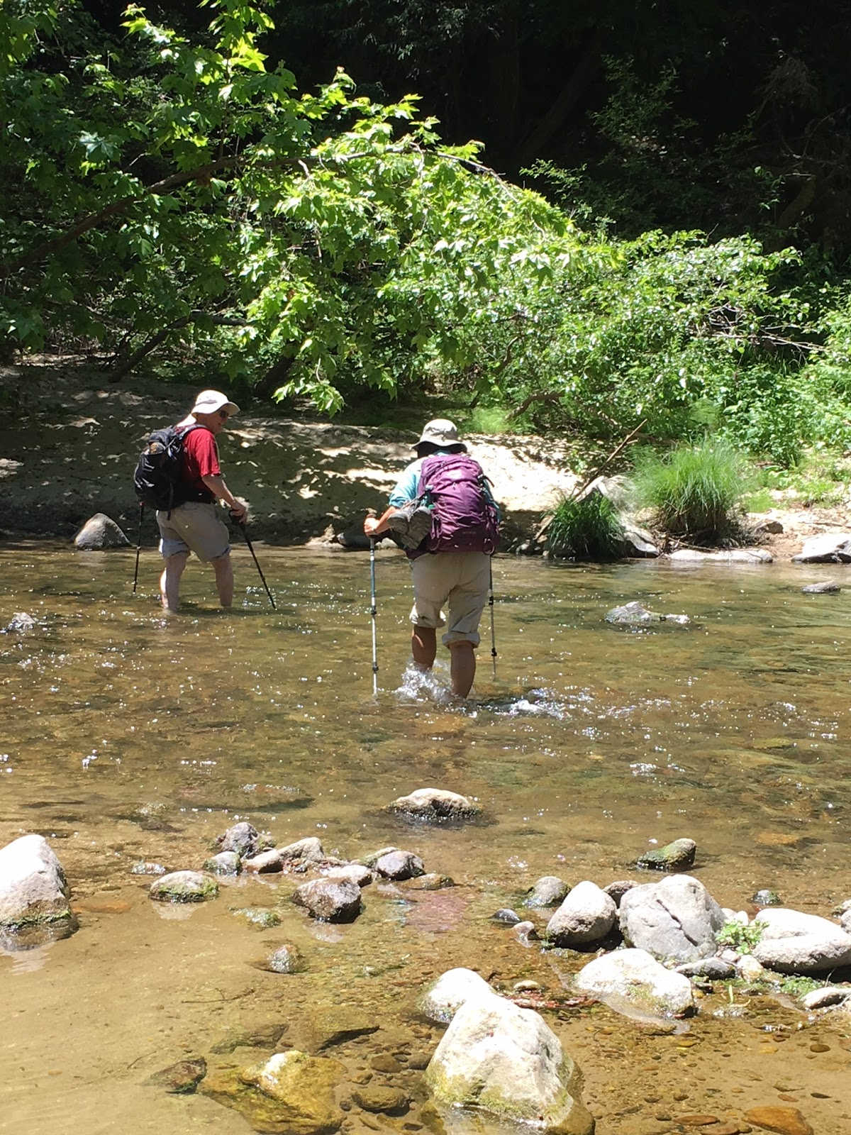 The Villages Hiking Club: Henry Cowell Redwoods State Park Hike on