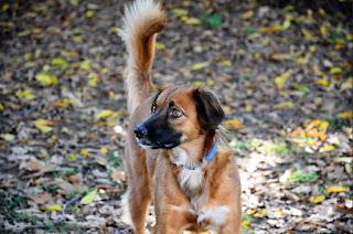 função da cauda do cão