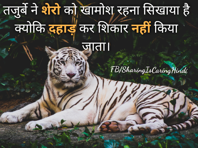 Anonymous Hindi Quotes on Experience, Lion, Silence, Lion, शेरो, खामोश