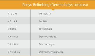 klasifikasi Penyu Belimbing - PENYU BLIMBING SI PENJELAJAH SAMUDRA