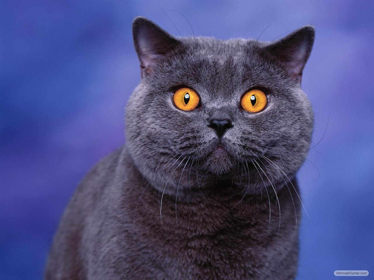 Perawatan Kucing Kucing Hitam Imut Lucu
