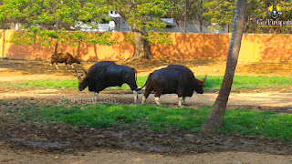Mysore Zoological Park