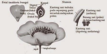 Bagian - bagian bunga
