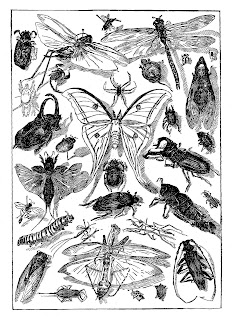 insect bug digital download collage sheet