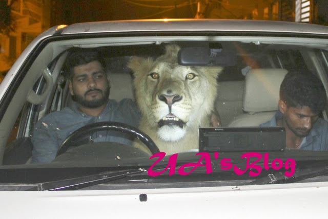 Unbelievable! Meet The Brothers Who Live And Drive Around With A Lion Called Simba (Photos)