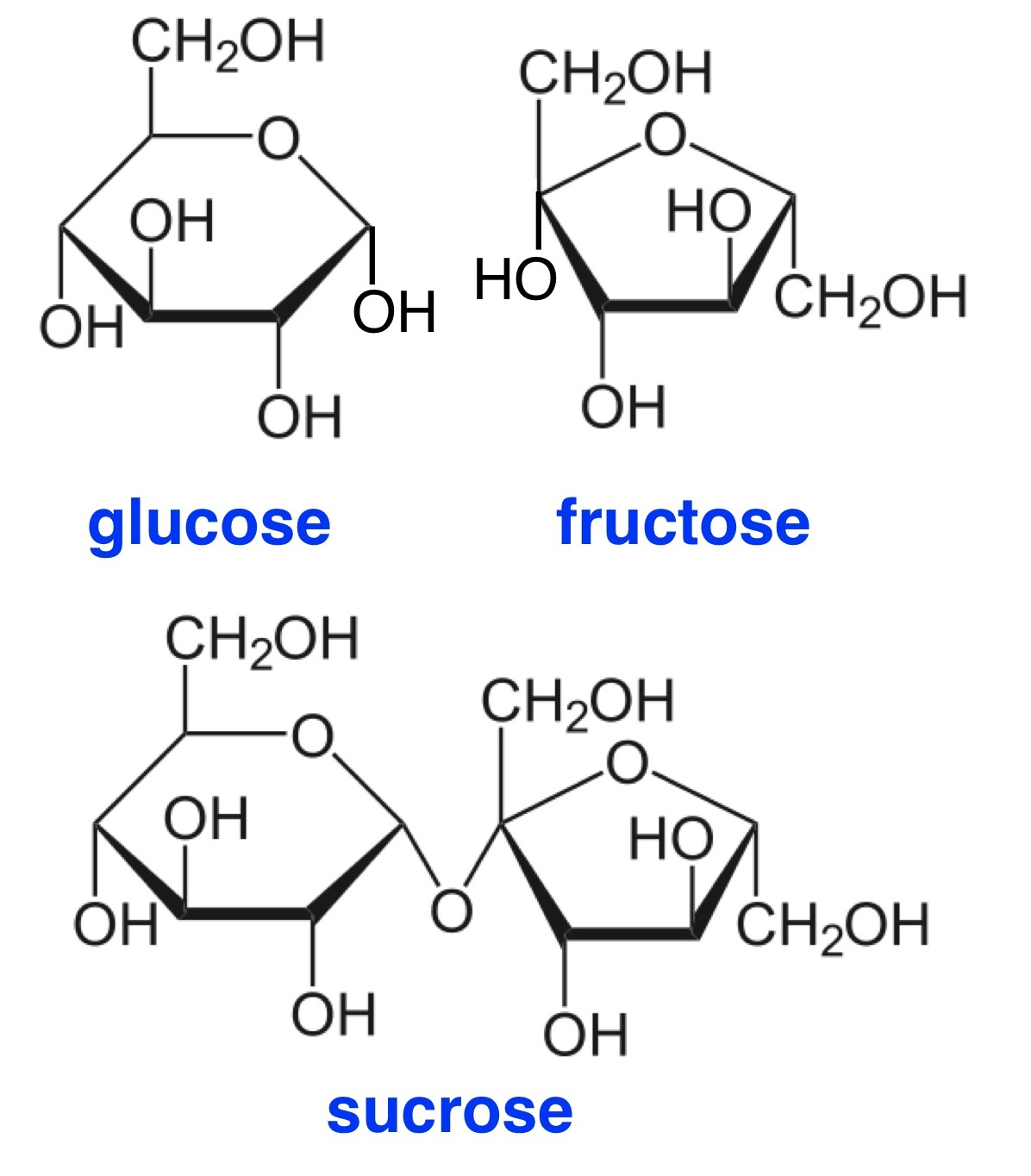 Glucose Fructose And Galactose Ring Structure Sketch