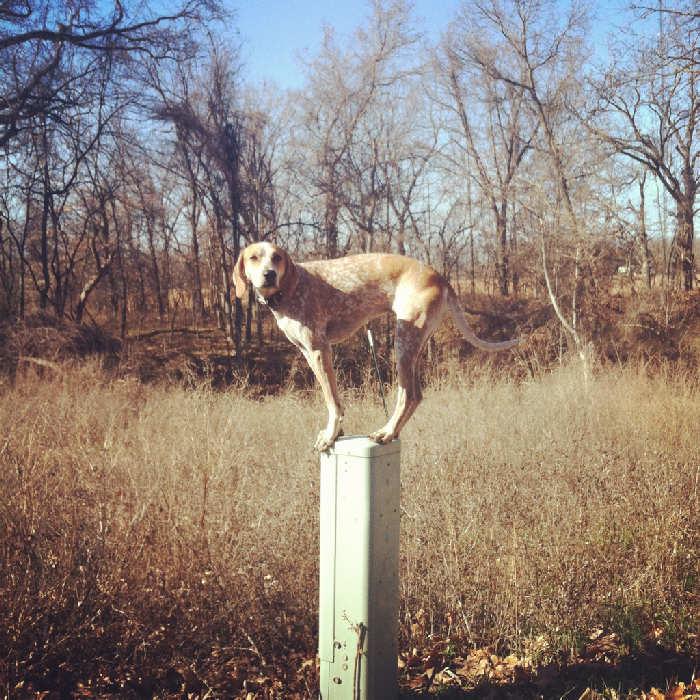 Послушная собака 2