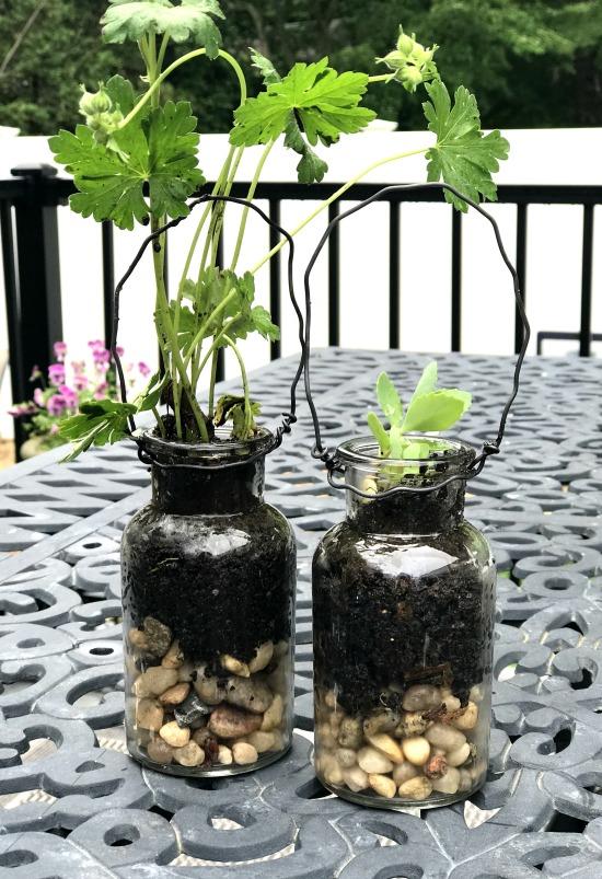 DIY Hanging terrarium planters