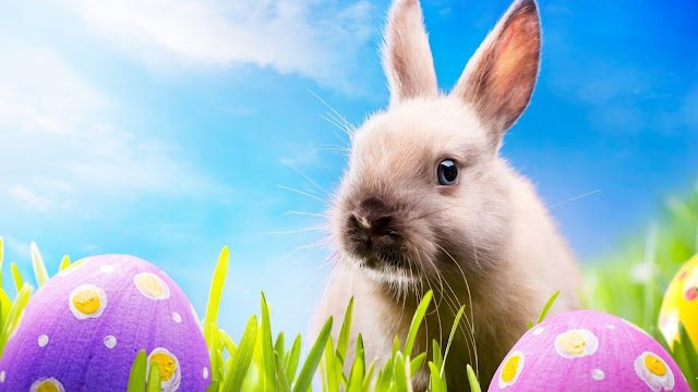 Happy Easter Eggs & Bunny 2017  Best Images Wallpapers Pictures Of Easter Bunny & Eggs