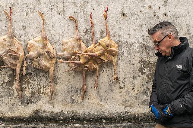 Canards suspendus au mur d'une maison à Xidi