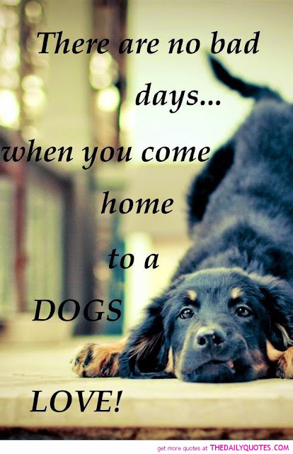 Love Animals Quotes Mesmerizing Pets N More Best Quotes For Animal Lovers
