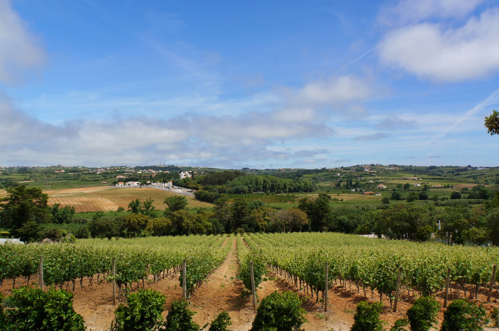 Quinta dos Loridos - Carvalhal - Portugal