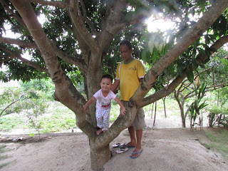 Anak manjat pohon