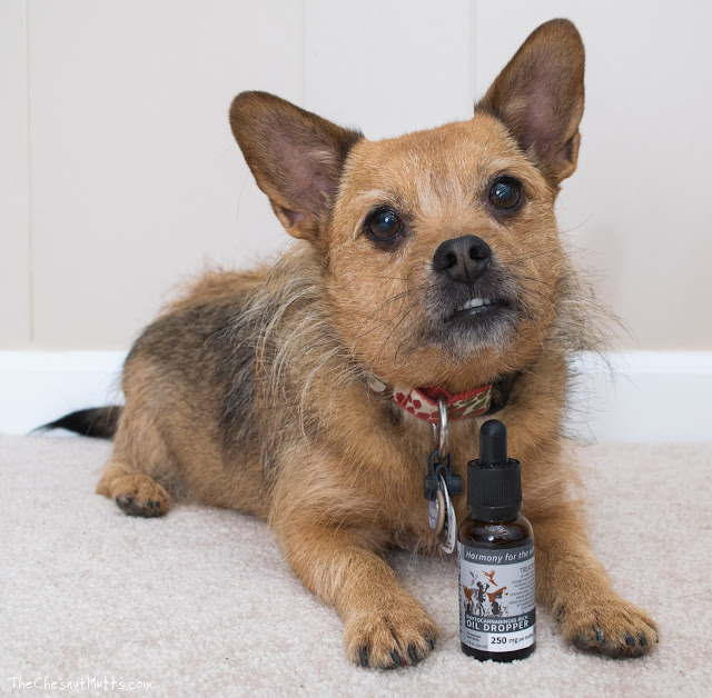 Treatibles CBD Oil for Pets