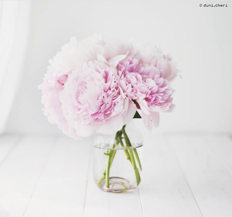 peonies pink white