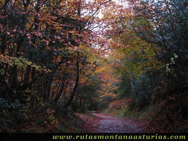 Ruta Bosque de Peloño