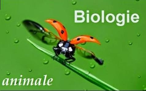 [صورة مرفقة: BIOLOGIE%2BANIMALE.jpg]