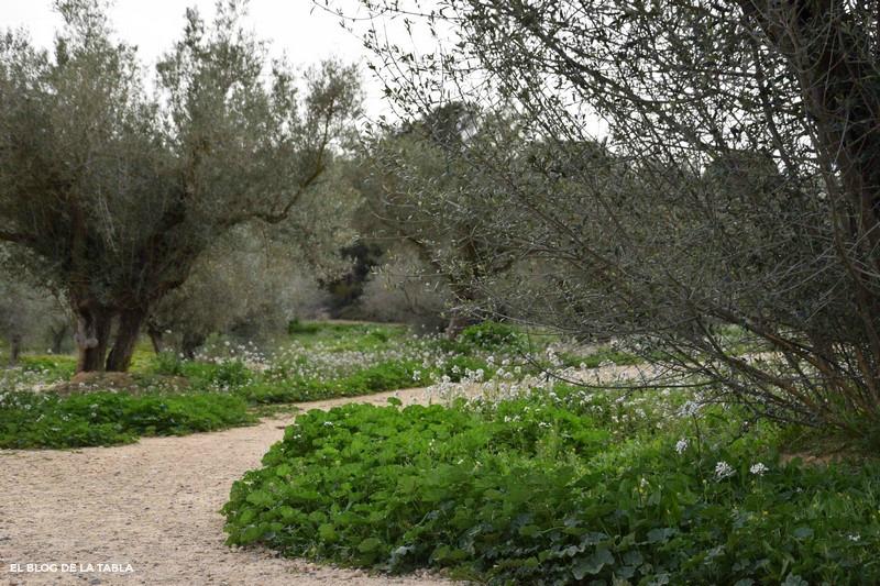 flores silvestres y olivos