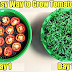 Faster Way of Growing Tomatoes in your House!