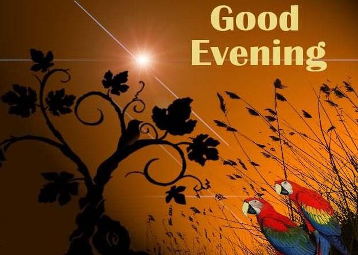 Добрый вечер картинки на английском