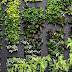 """Masuk Musim Kemarau, yuk Buat """"Green Wall"""" dengan Tanaman Ini"""