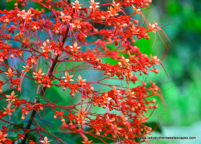 flowers in Seychelles Botanical Garden