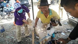 Omset Pedagang Kambing Kurban di Jombang Turun Drastis, Ini Penyebabnya