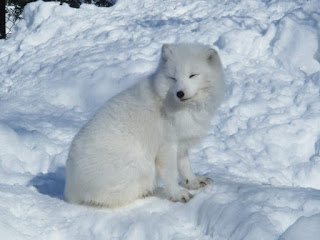 https://www.meteorologiaenred.com/clima-polar.html