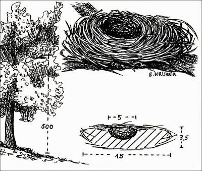 nidos de fiofio
