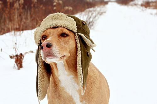 af63d986f2b6 Αγοράστε του αδιάβροχο και μάλλινα αξεσουάρ! Στους χειμερινούς περιπάτους  σας μην ξεχνάτε να έχετε τις απαραίτητες προφυλάξεις  πριν βγείτε για  παιχνίδια ...
