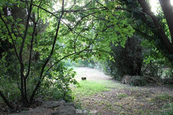 Un claro en la zona boscosa detrás de la villa
