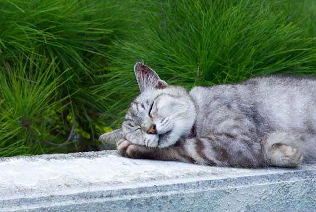 cat sleeping on wall