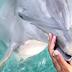 Lumba Lumba Kembalikan Iphone Milik Orang yang Terjatuh di Air, Pinter Ya Dia