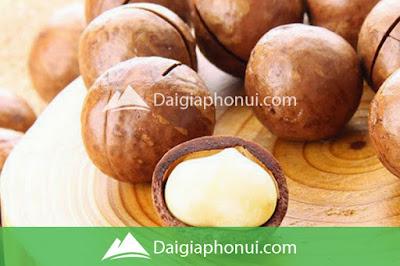 Hạt Mắc Ca - Macadamia Nuts - Dai Gia Pho Nui