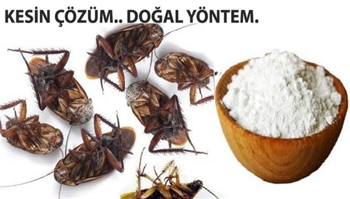 Ev Yapımı Böcek İlacı Tarifi