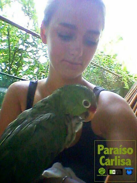 http://www.centrorescateparaisocarlisa.com