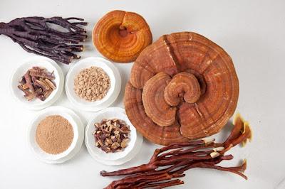 Sử dụng nấm linh chi nhỏ có chất lượng tốt