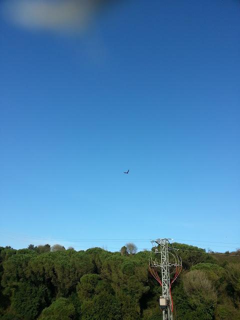 Zona de observación de aves