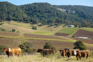 Hunter Valley Vineyard by Mike Weber