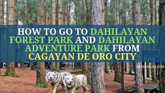 How to go to Dahilayan Forest Park and Dahilayan Adventure Park from Cagayan de Oro City