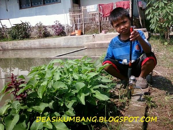 Umpan Kangkung Untuk Memancing Ikan Air Tawar