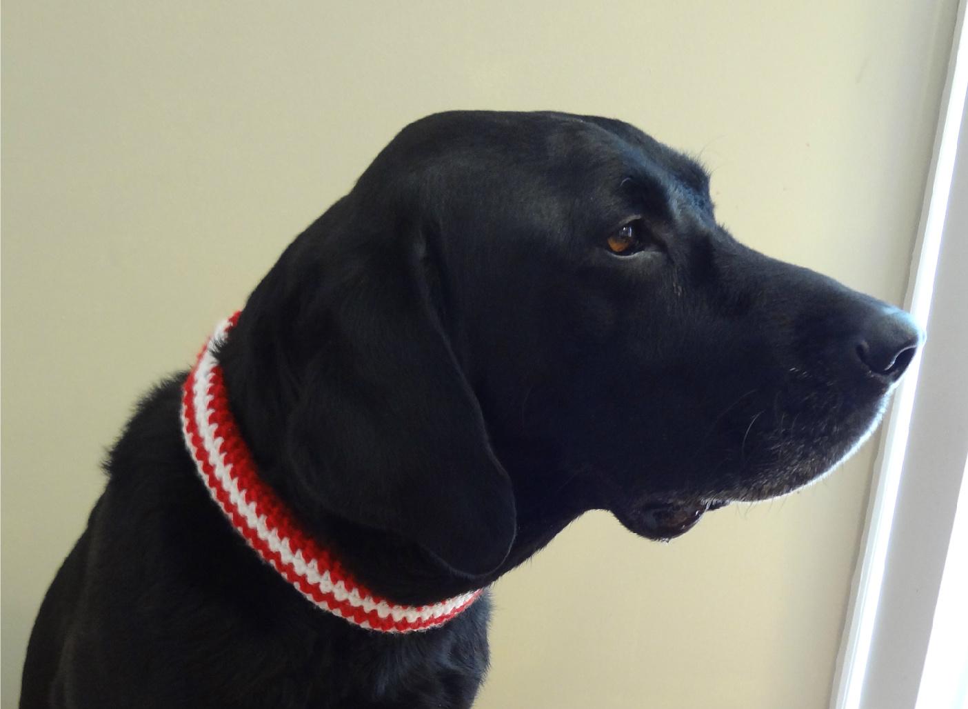 Fiber Flux Free Crochet Patterncrochet Pet Collar Sleeve