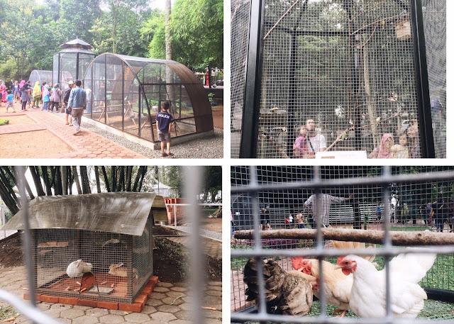 kebun binatang gratis bandung